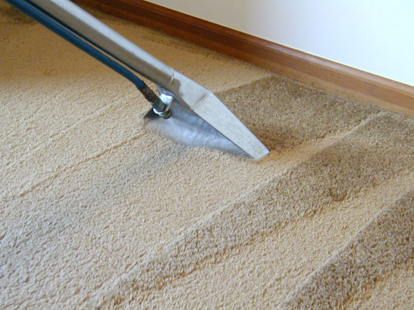Camden carpet and upholstery cleaning